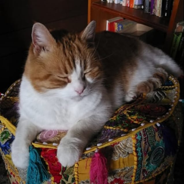 Photo of Tash