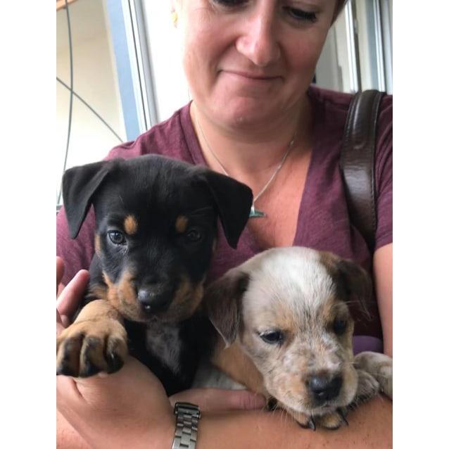Photo of Cindy Bear *Adoption Pending*