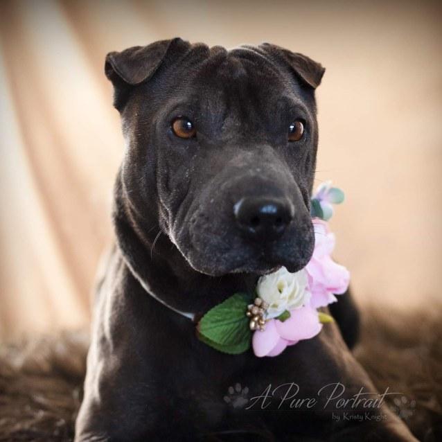 Photo of Violet (12.5kg)