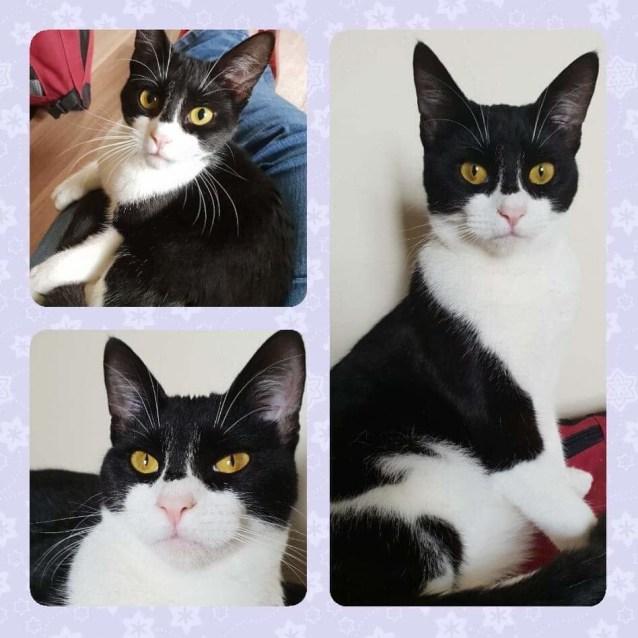 Photo of Athena ( Aka Bat Cat)