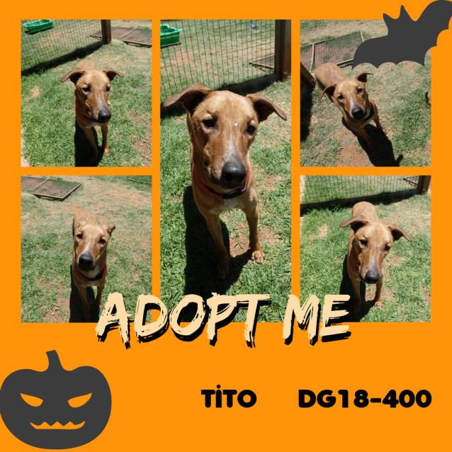 Photo of Tito   Dg18 400