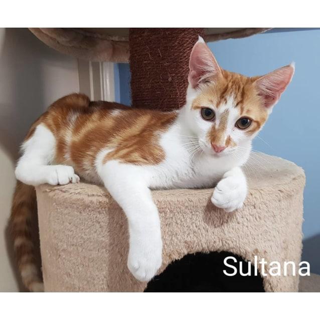 Photo of Sultana