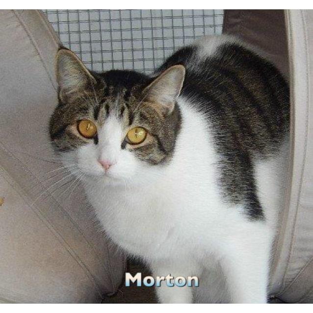 Photo of Moreton