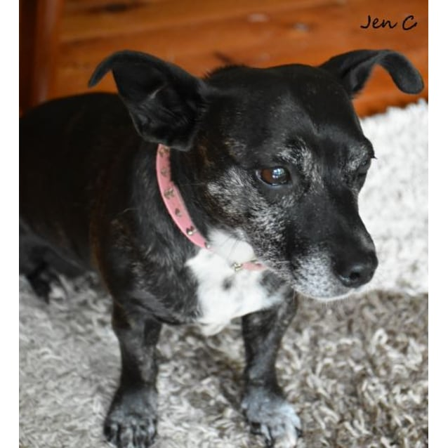 Photo of Jessie ** A Beautiful Senior Girl **