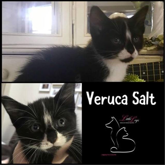 Photo of Veruca Salt