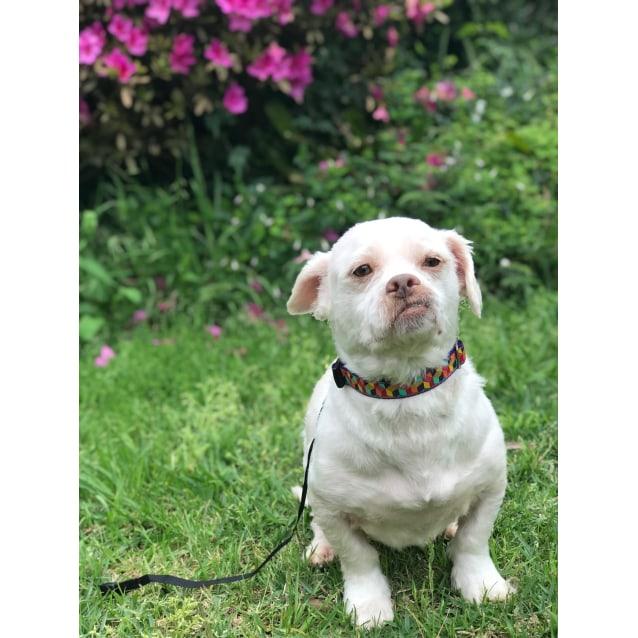 Photo of Bubba Lou
