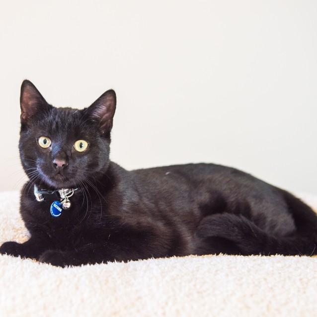 Photo of Boo   Gc0088 * Adoption Pending