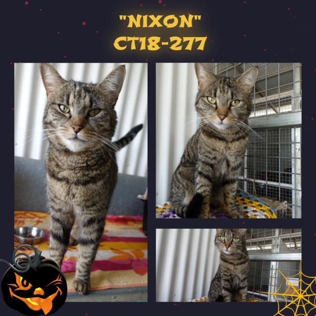 Photo of Nixon  Ct18 277