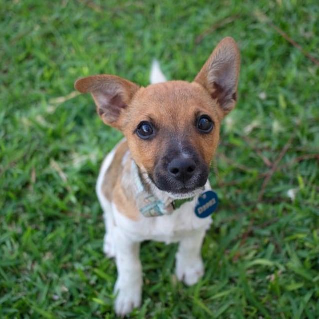 Photo of Tonto D3982   Adoption Pending