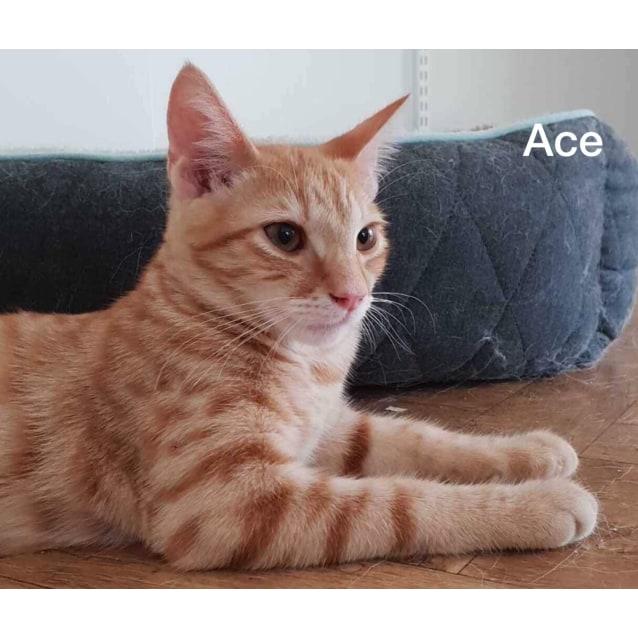 Photo of Ace (Kitten)