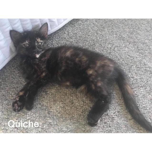 Photo of Quiche