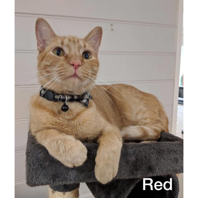 Photo of Red