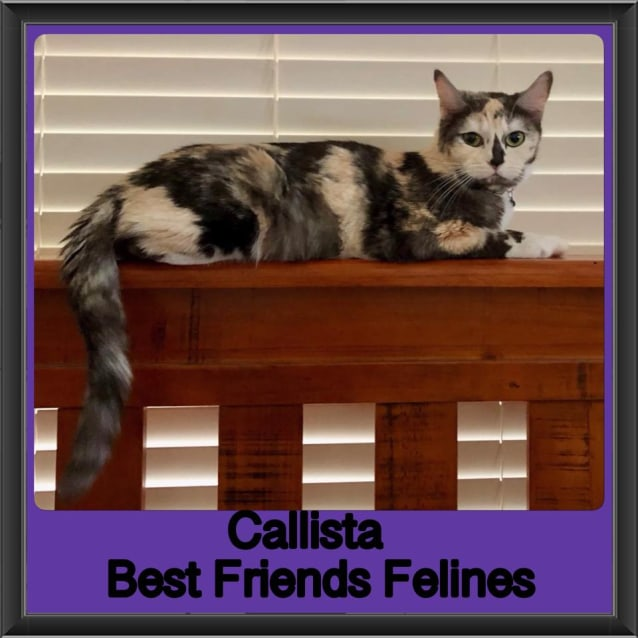 Photo of Callista
