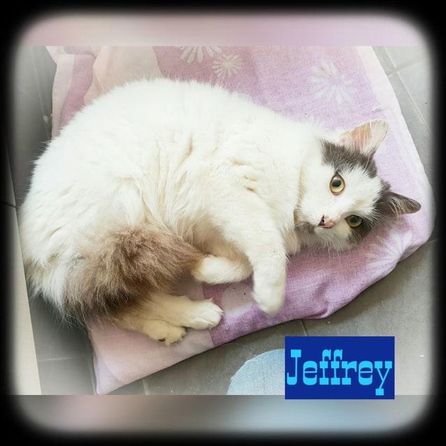 Photo of Jeffrey