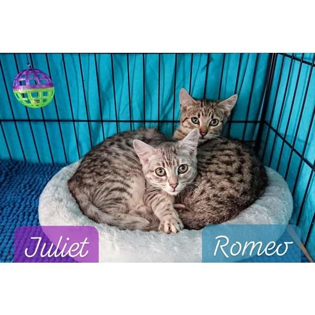 Photo of Romeo & Juliet
