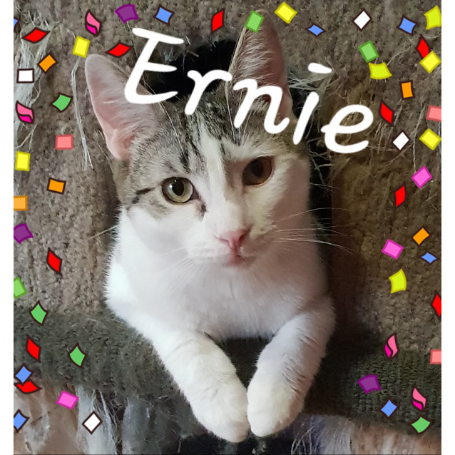 Photo of  Ernie