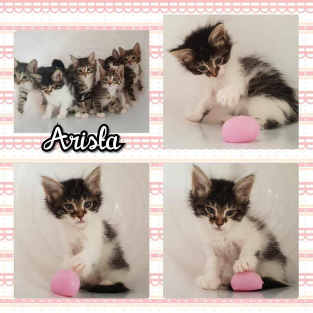 Photo of Arista