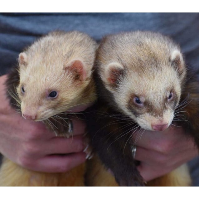 Photo of Pablo & Squinty