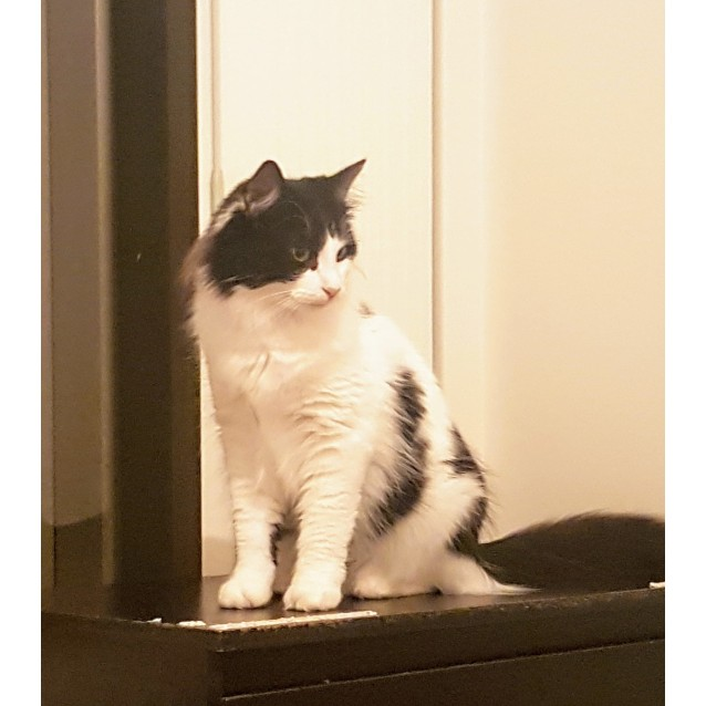 Photo of Arya **On Trial With My New Family**