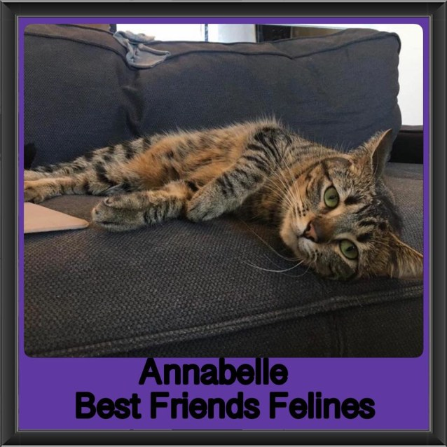 Photo of Annabelle