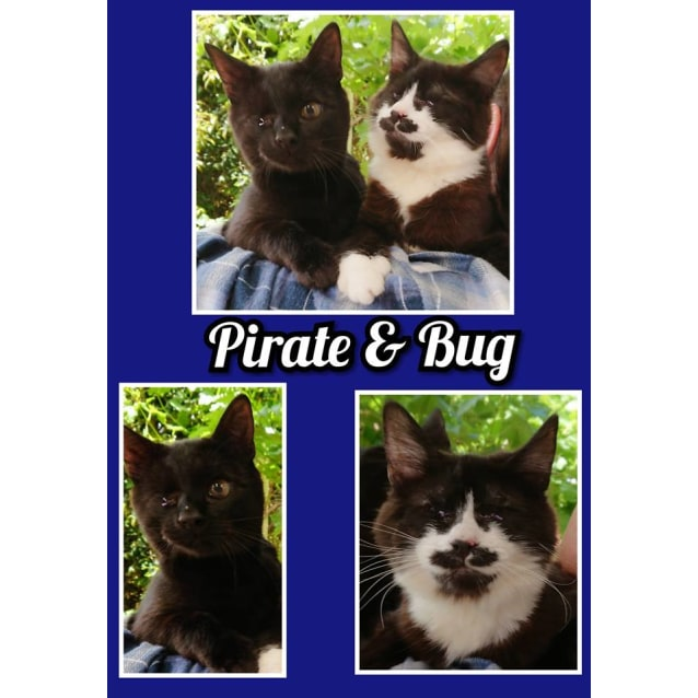 Photo of Bug & Pirate