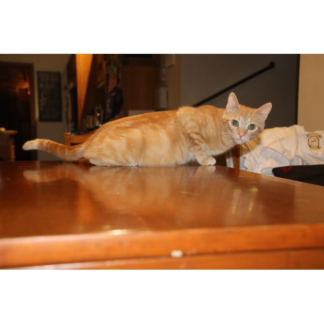 Photo of Lettie   Purrfect Match Cat Adoptions