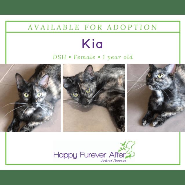 Photo of Kia