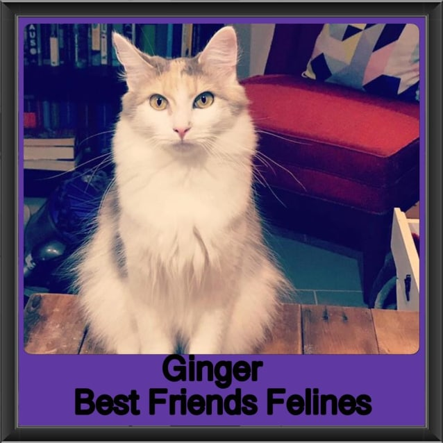 Photo of Ginger