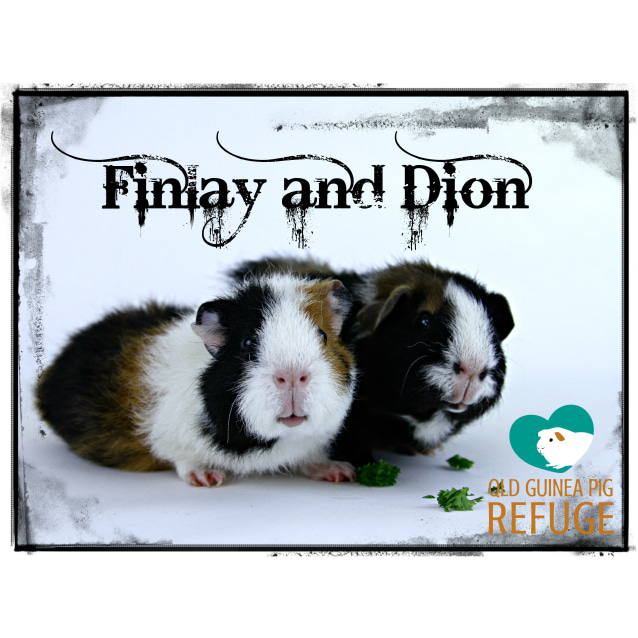 Photo of Finlay And Dion
