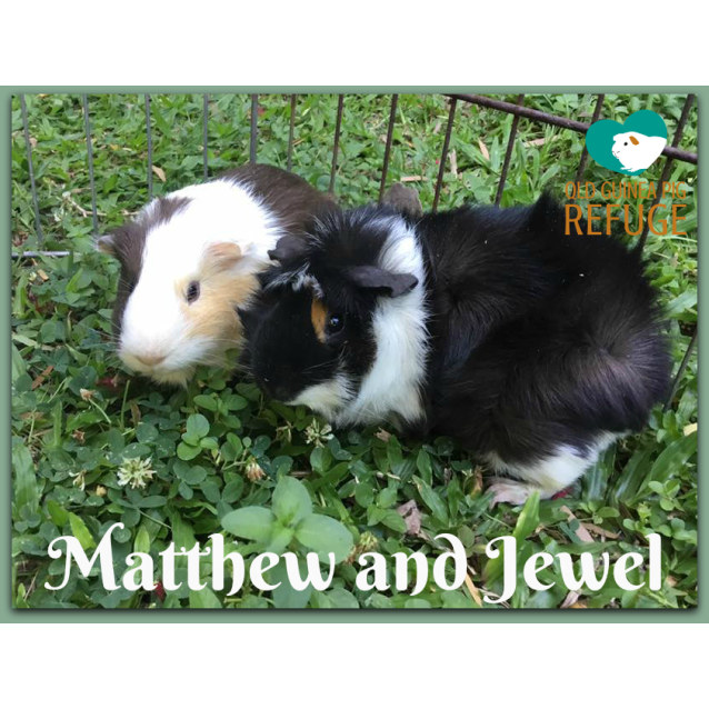 Photo of Matthew (Desexed Male) And Jewel