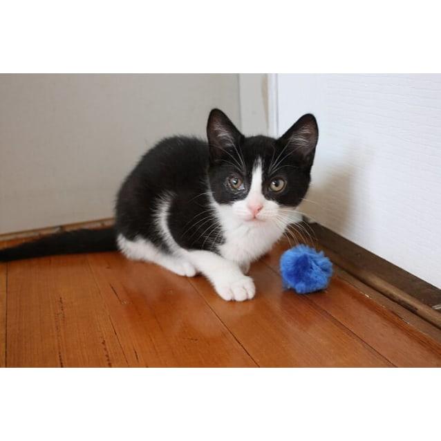 Photo of Gizmo