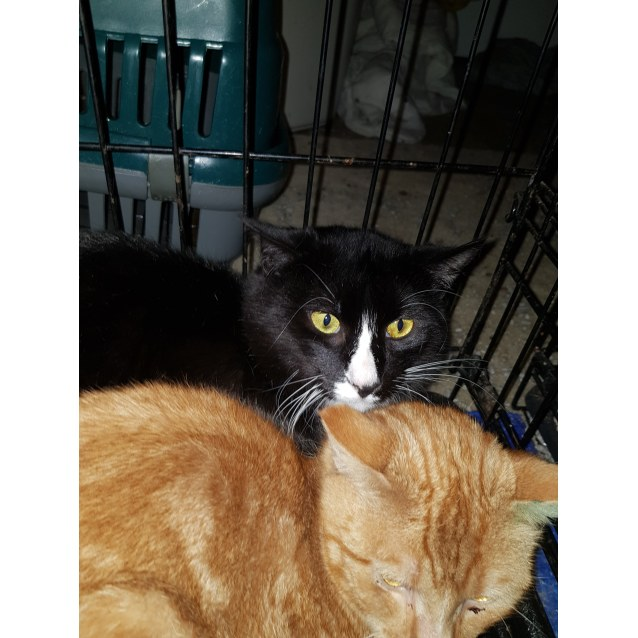 Photo of Tuxedo~Rainbow Cat Rescue~