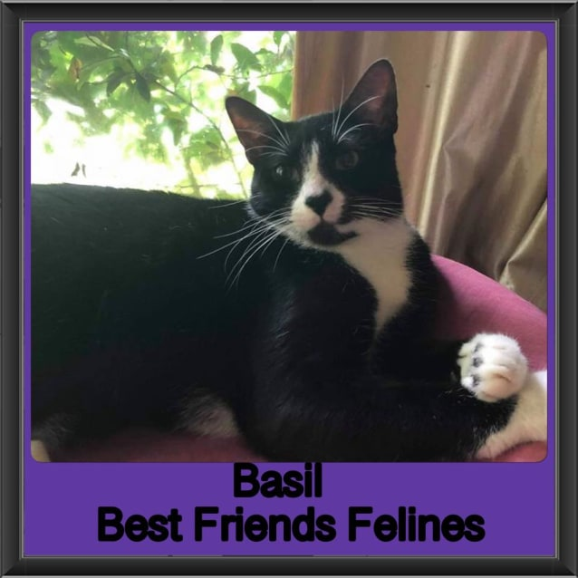 Photo of Basil