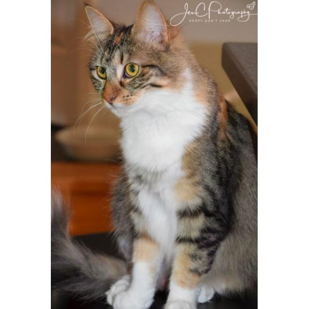 Photo of Celeste