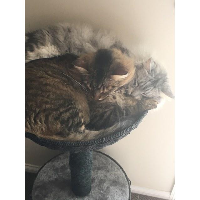 Photo of Charlie & Kovu (Located In Pakenham)