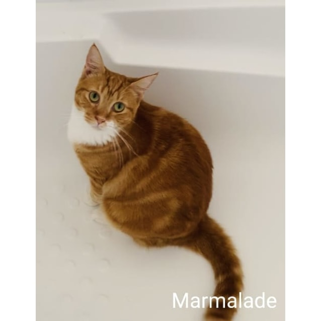 Photo of Marmalade