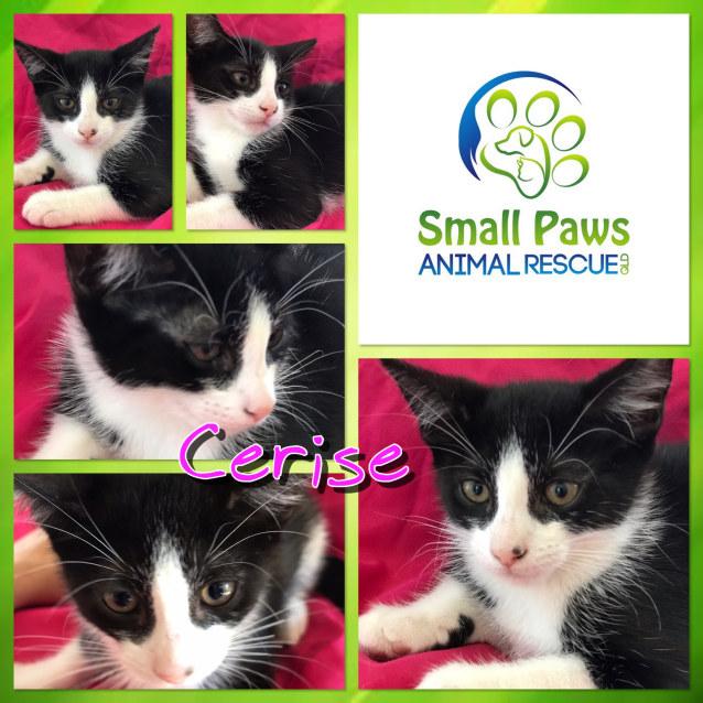 Photo of Cerise