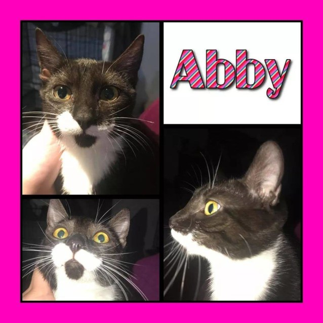 Photo of Abby *Free To Approved Home*
