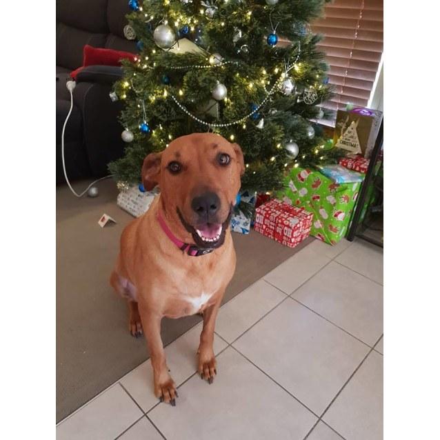 Photo of Sophie *Adoption Pending*