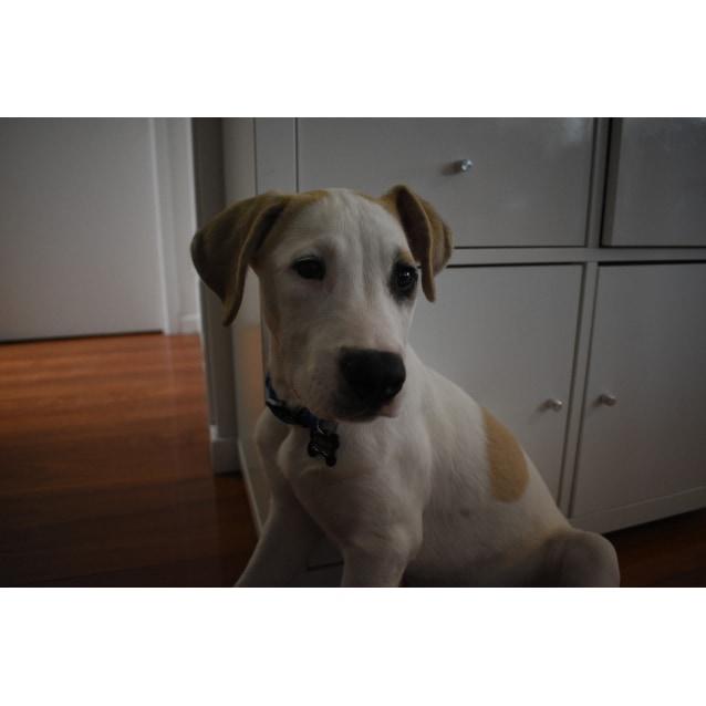 Photo of Fletcher