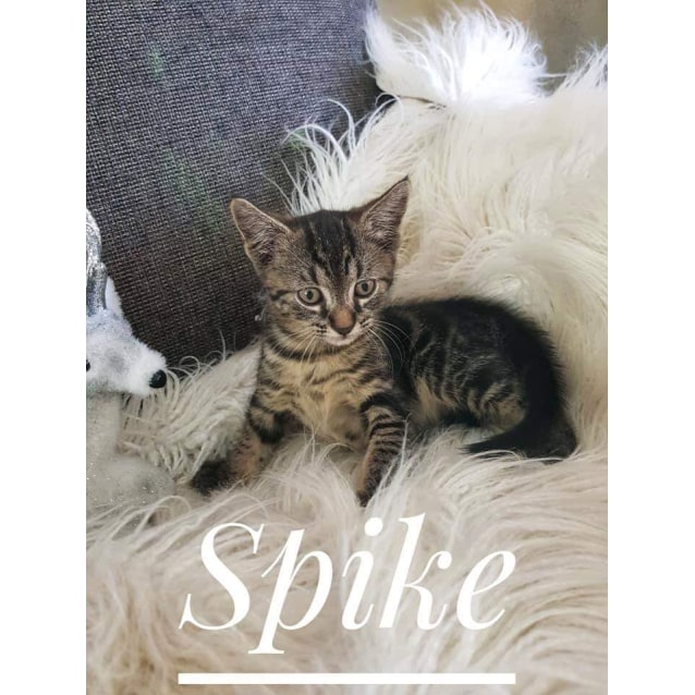 Photo of Spike