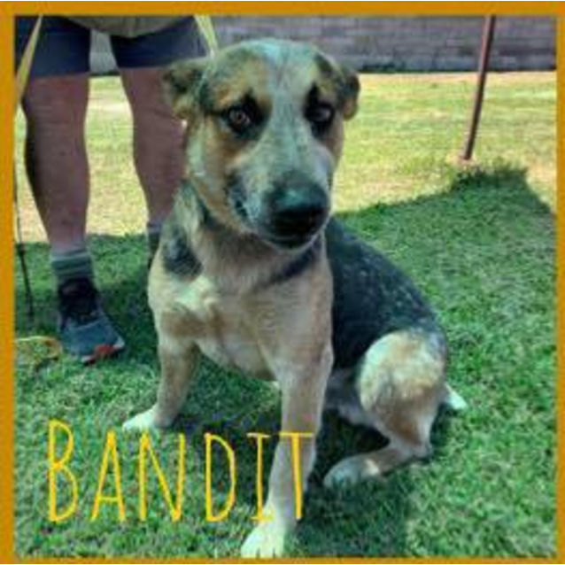 Photo of Bandit