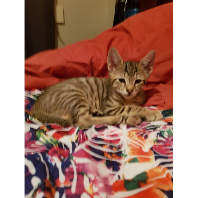 Photo of Leeroy * On Trial With My New Family *