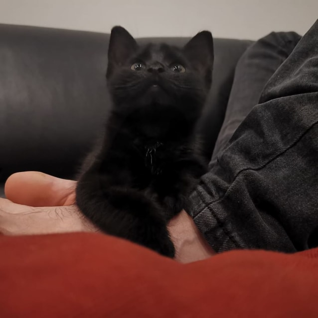 Photo of Lewis * On Trial With My New Family *