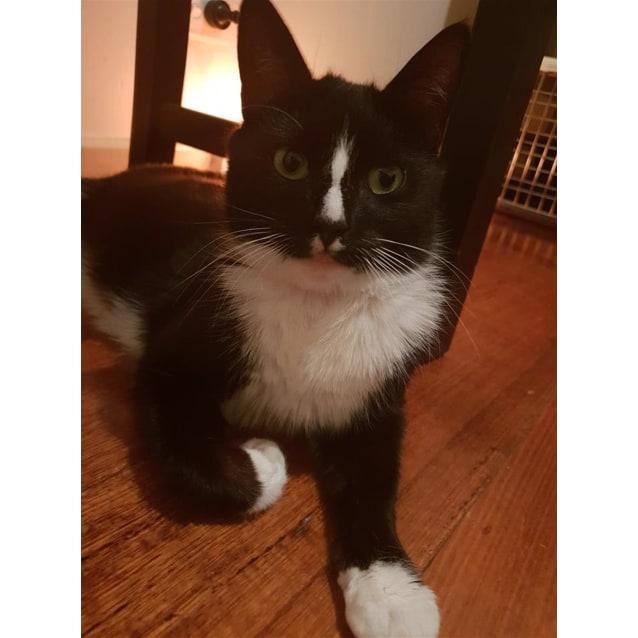 Photo of Felicia(Now Molly)
