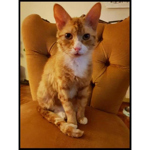 Photo of Frankie