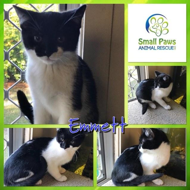 Photo of Emmett