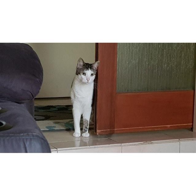 Photo of Kit Kat
