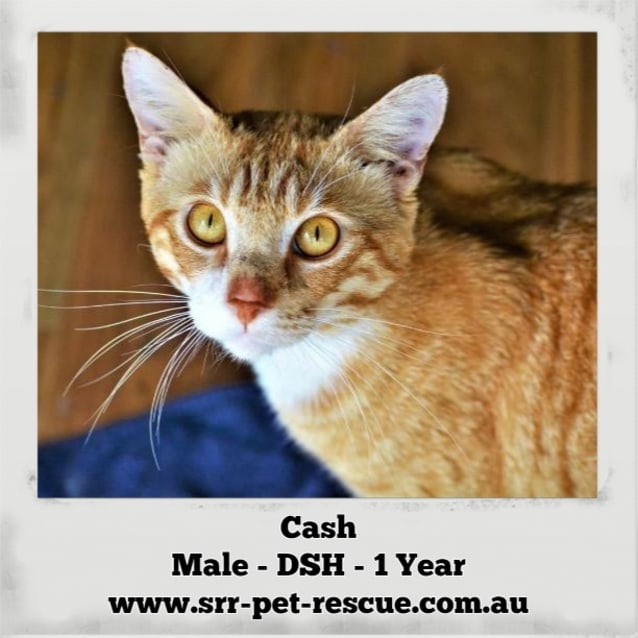 Photo of Cash