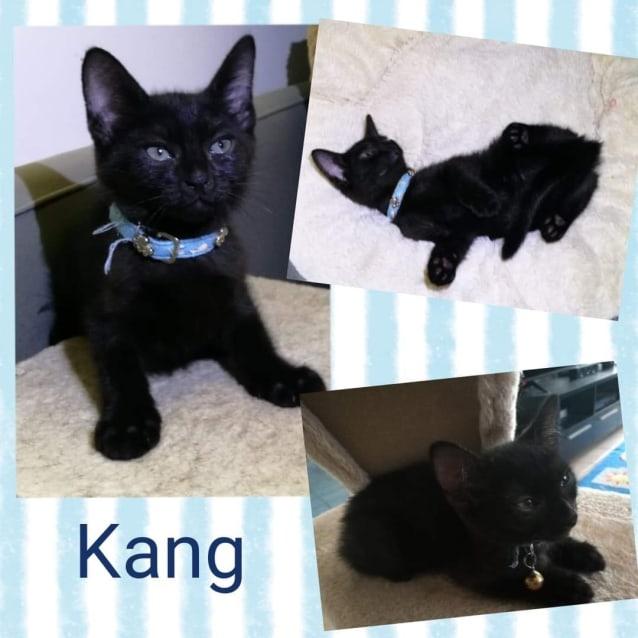 Photo of Kang